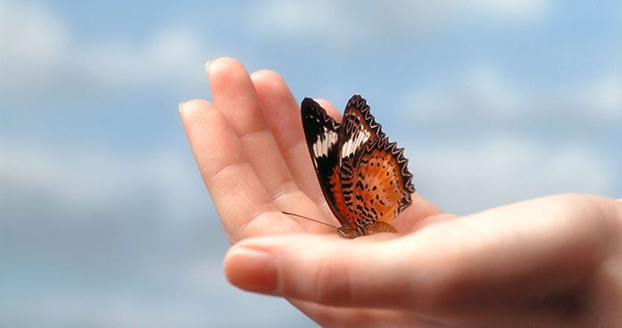 Butterfly Release at Forest Lawn Funeral Home